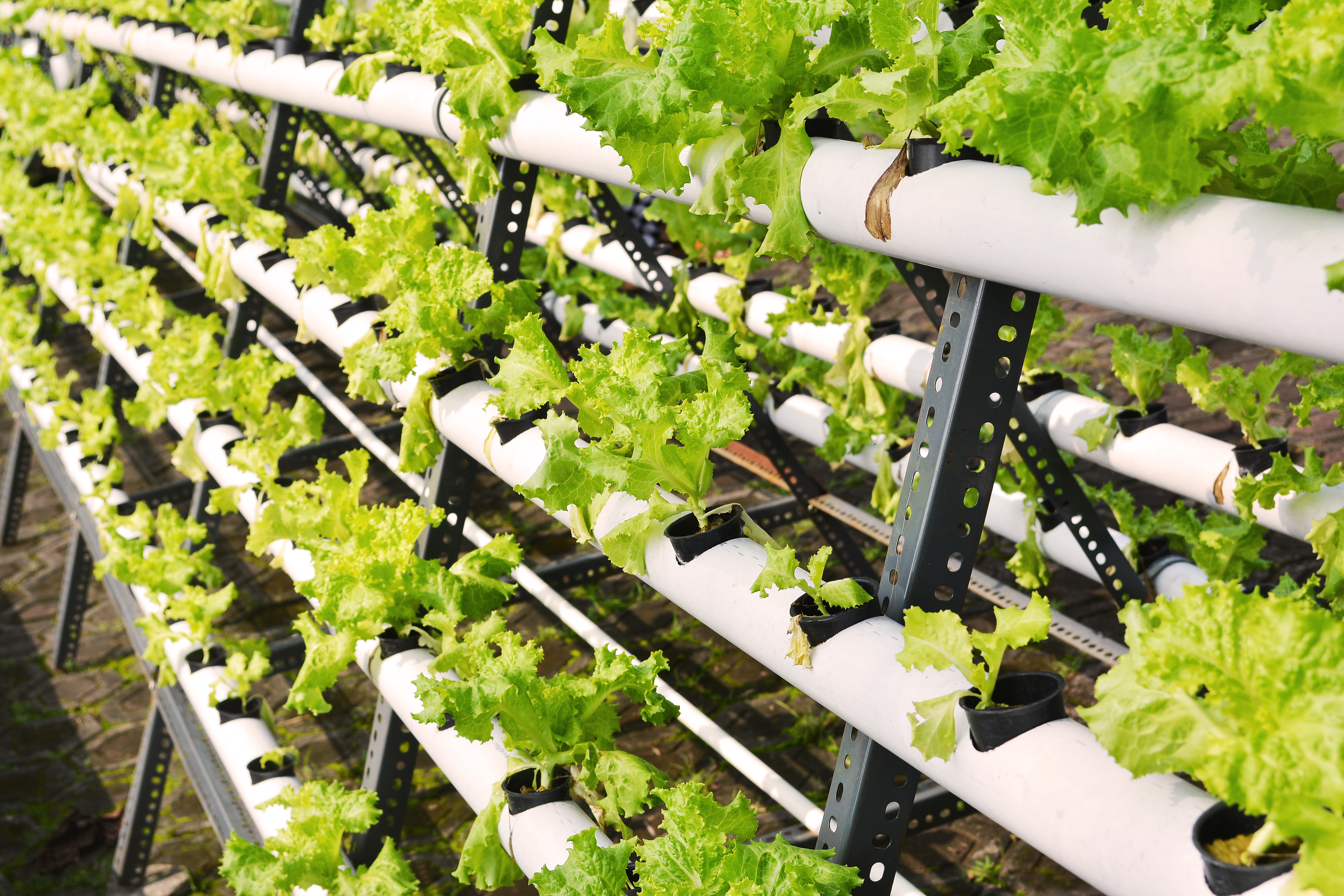 Shipping containers with hydroponics to grow plants - Hydroponic container gardening ...